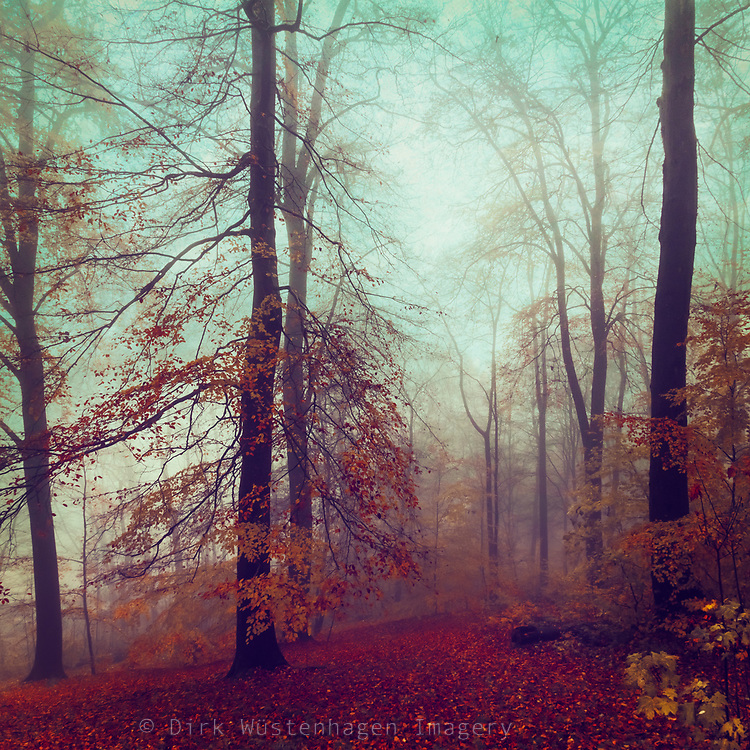 Misty fall morning in a beech tree forest - photograph processed with texture overlays