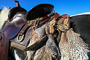 A game strap carrying sharptails and hungarian partridge hangs from the saddle on John Zeman's horse Buckwheat.