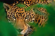 Pantanal and the Amazon, Brazil