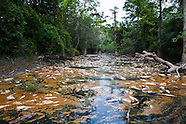 Fishkill Caused by Toxic Spill