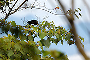 Ecuador, May 20 2010: Images from Wild Sumaco...Copyright 2010 Peter Horrell