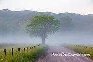 66745-04820 Hyatt Lane in fog Cades Cove Great Smoky Mountains National Park TN