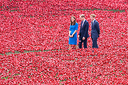 """© Licensed to London News Pictures. 05/07/2014. London, UK. The Duke and Duchess of Cambridge and Prince Harry visit the Tower of London's """"Blood Swept Lands and Seas of Red"""" ceramic poppy installation in the Tower of London moat. Photo credit : Vickie Flores/LNP"""