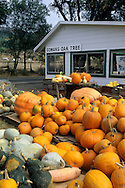 Gowans Oak Tree produce stand, near Philo, Anderson Valley, Mendocino County, California