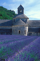 Provence, France.lavender fields at the medieval Abbey of Salenque, near Gorde.Photo by Owen Franken