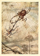 The Gnat and the Lion from the book ' Aesop's fables ' Published in 1912 in London by Heinemann and in  New York by Page Doubleday Illustrated by Arthur Rackham,