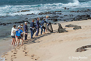 NOAA researchers attempt to capture a Hawaiian monk seal, Monachus schauinslandi, Critically Endangered endemic species, in order to put a Crittercam and tracking instrumentation on it; west end of Molokai, Hawaii, photo taken under NOAA permit 10137-6, Ho ike a Maka Project