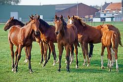 Breeding foals<br /> Photo © Dirk Caremans