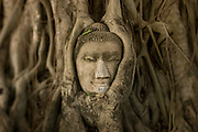 Ayutthaya Buddha head surrounded by fig tree roots.