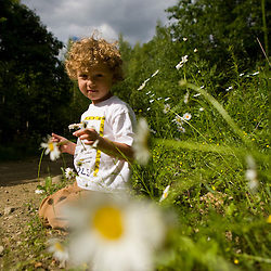 A young boy (age 4) picks daisies in a forest in Turner, Maine. (MR)