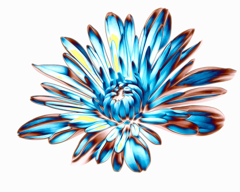 Splashed Blur Petals Pop From A Backdrop Of White In An Explosion Of Floral Geometry