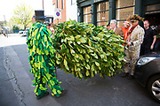 May Day custom of Deptford Jack in the Green, a man encased in a framework entirely covered with greenery, is one of the lesser-known modern revivals by the Blackheath Morris Men of English traditional customs on May 1st 2016 in London, United Kingdom. Bringing out the Jack. Fowlers Troop Jack in the Green was revived in the early 1980s. Originally a revival from about 1906, it developed from the 17th Century custom of milkmaids going out on May Day with the utensils of their trade, decorated with garlands of flowers and piled into a pyramid which they carried on their heads. By the mid eighteenth century other groups, notably chimney sweeps, were moving in on the milkmaids territory as they saw May Day as a good opportunity to collect money, so carried a Jack in the Green. Over the last 25 years several popular festivals have grown up around the Jack in the Green tradition. Deptford Jack in the Green is not very widely known although it has been running since the early 1980s.