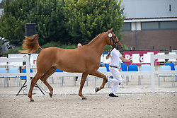 003, My Golden Girl<br /> Nationaal Kampioenschap KWPN<br /> 3 jarige springmerries<br /> © Hippo Foto - Dirk Caremans<br />  15/08/2020