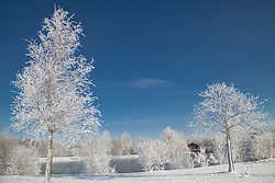 Snow covered trees at lakeshore, Eichenau, F¸rstenfeldbruck, Bavaria, Germany
