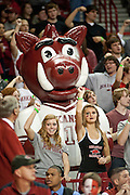 Nov 16, 2011; Fayetteville, AR, USA;  Arkansas Razorback fans and mascot Boss Hog cheer during a game against the Oakland Grizzlies at Bud Walton Arena. Arkansas defeated Oakland 91-68. Mandatory Credit: Beth Hall-US PRESSWIRE
