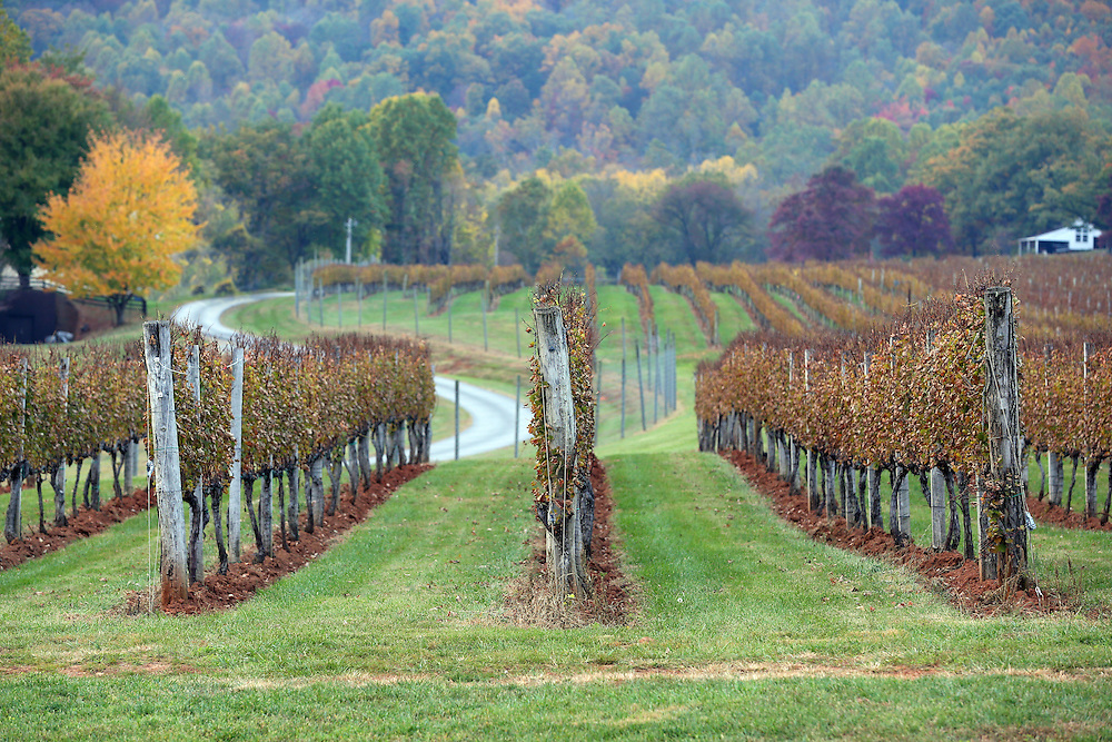 Scenic view at Afton Mountain Vineyards located next to the Blue Ridge Parkway in Afton, Virginia. Photo/Andrew Shurtleff