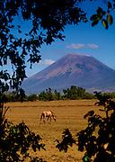 Horse grazes under the very active San Cristobal Volcano, Nicaragua's tallest volcano.