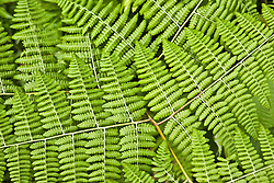 July 21, 2019 - Fern (Credit Image: © Caley Tse/Design Pics via ZUMA Wire)
