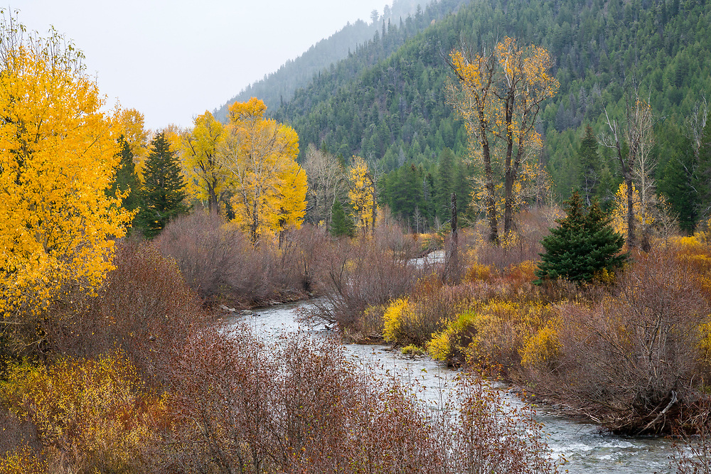 Open Edition<br /> Wood River just below Phantom HIll with fall colors and forest hillside along the willow edged stream in Central Idaho