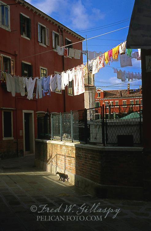 Venice Cats 1, Italy