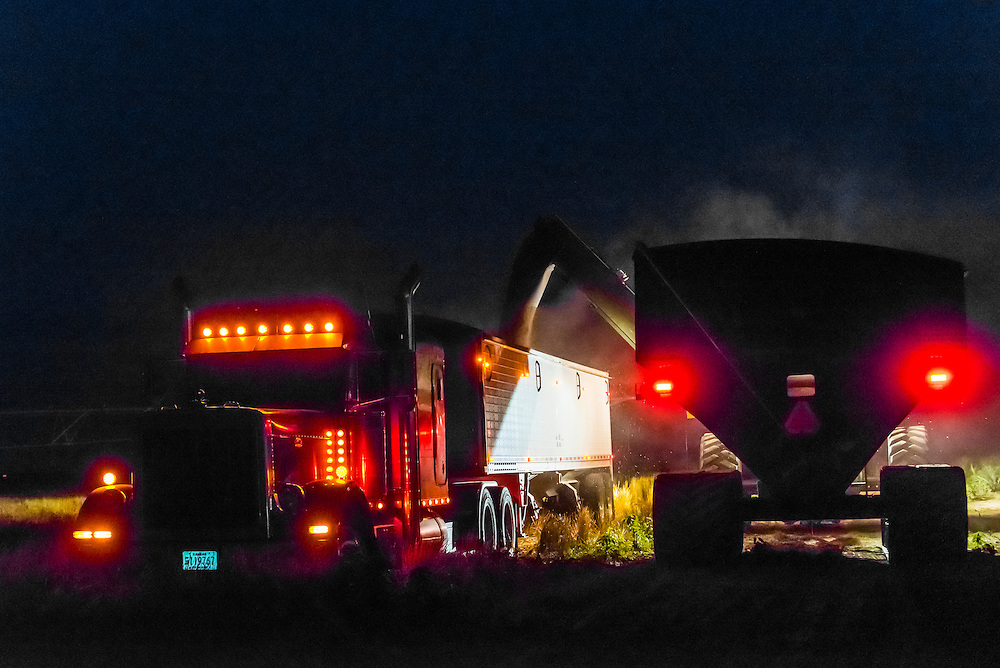 A tractor unloading grain from the grain cart it is pulling into the grain trailer of a tractor trailer truck, Schields & Sons Farming, Goodland, Kansas USA.