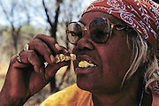 Bessie Liddle savors a roasted witchetty grub for its flavor and its nostalgia (she has not hunted the grubs to the extent she did when she was young, partly due to the proliferation of supermarket foodstuffs and partly due to her age), outside Alice Springs, Central Australia. (Witchetty grubs are the larvae of cossid moths).(Man Eating Bugs page 22)