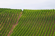vineyard riquewihr alsace france
