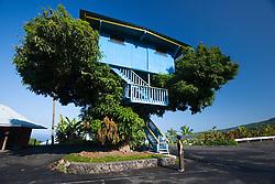 Woman tourists observing a large tree house on tropical mango tree, Ke`ei, Big Island, Hawaii