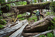 Henry navigates a tangle of blowdown trees along the West Coast Trail, British Columbia, Canada.