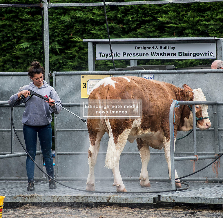 some of the cattle get the VIP treatment during final preparations for this years Royal Highland Show at Ingliston near Edinburgh.<br /> <br /> © Dave Johnston/ EEm
