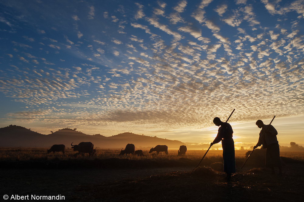 Two farmers working their field at sunrise, sky full of clouds, Mrauk U