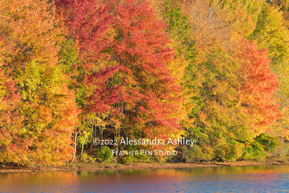 Early morning sun lights up the shoreline of the Clear Fork reservoir  during peak autumn color. Image placed as semifinalist in NANPA 2018 Showcase.