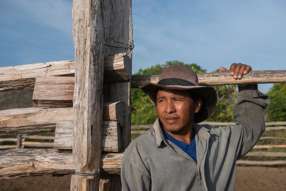 Ranch hand Saddle Mountain<br /> Saddle Mountain Ranch<br /> Savanna <br /> Rurununi<br /> GUYANA<br /> South America,<br /> Vitilus Bell (aka Hal)