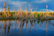 Boreal forest and wetland at sunset<br />  Yellowknife Highway<br /> Northwest Territories<br /> Canada