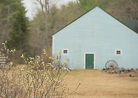 Spring Pussywillows.  New Hampshire. ©2015 Karen Bobotas Photographer