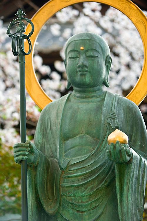 Asia, Japan, Honshu island, Kyoto, bronze Buddha statue and cherry blossom trees