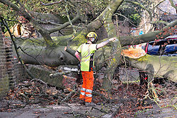 © Licensed to London News Pictures.18/01/2018<br /> SWANLEY, UK.<br /> Storm Fionn downed a 70 year old Beech tree last night in Greenwich Park which crashed through the boundary wall onto a parked Volvo on Maze Hill blocking the Road.<br /> Photo credit: Grant Falvey/LNP