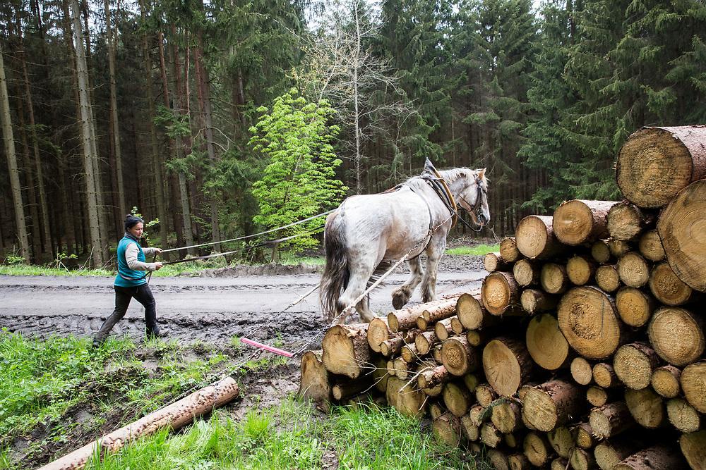 Pferderückerin Karen Kiffner