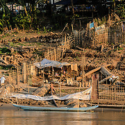 A local farmer takes advantage of the dry season and low water of the Mekong River to build a small temporary farm on the steep muddy banks of the river near Luang Prabang in central Laos.