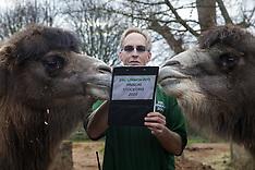 2020-01-02 ZSL London Zoo annual stocktake