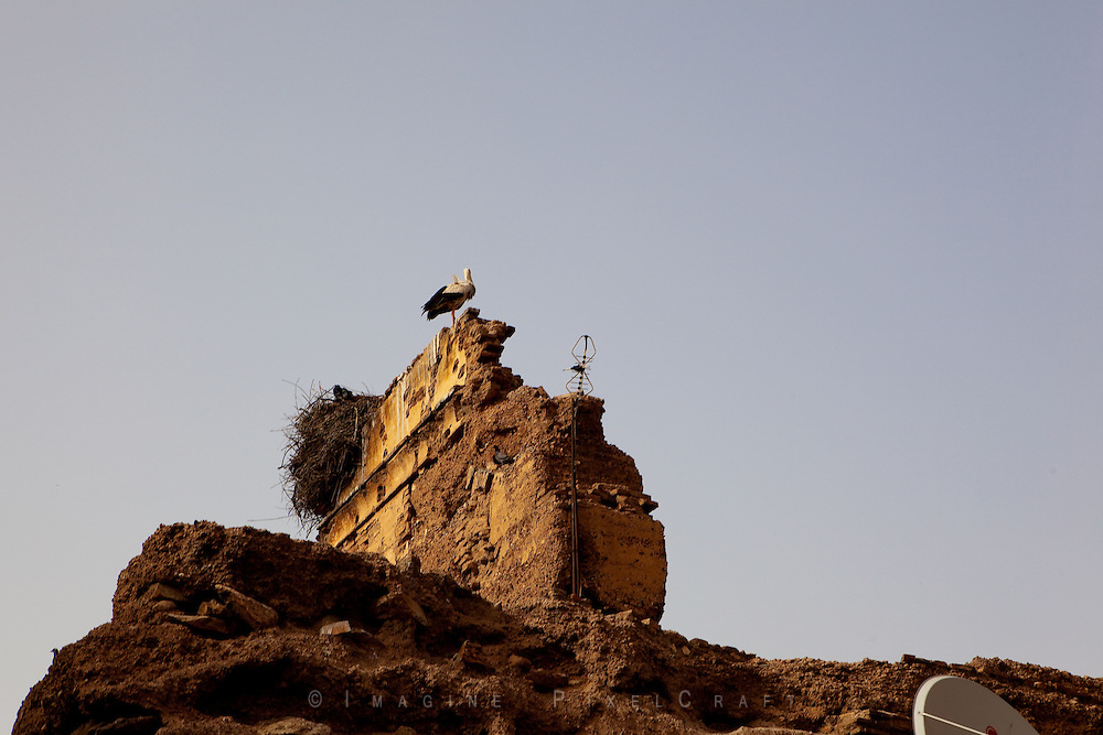 A family of storks make their home on the wall of the ancient Medina of Marrakech