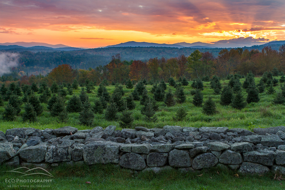 The sun rises over the White Mountains as seen from the Christmas tree farm at the Rocks Estate in Bethlehem, New Hampshire.