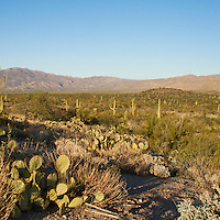 Saguaro National Park, Tucson. Rincon Mountains landscape.