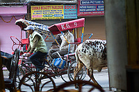 Cow and richshaw on street in Delhi, India.