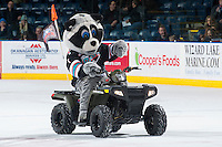 KELOWNA, CANADA - DECEMBER 2: Rocky Racoon rides his 2016 Polaris Sportsman ATV on December 2, 2015 at Prospera Place in Kelowna, British Columbia, Canada.  (Photo by Marissa Baecker/Shoot the Breeze)  *** Local Caption *** Rocky Racoon; Polaris;