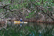 A kayaker paddling in a mangrove tunnel near Key Largo, Florida. WATERMARKS WILL NOT APPEAR ON PRINTS OR LICENSED IMAGES.