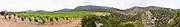 Alain Caujolle-Gazet Domaine des Grecaux in St Jean de Fos. Montpeyroux. Languedoc. Calcareous limestone plateau called rendzine. France. Europe. Vineyard. Soil with stones rocks. Calcareous limestone.