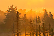 sunrise and fog at Highland Pond<br /> Torrance Barrens Dark-Sky Preserve<br />