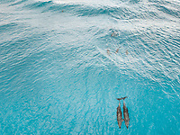 Aerial view of a group of Dolphin in the transparent sea in Tiputa pass on Tuamotu island, French Polynesia.