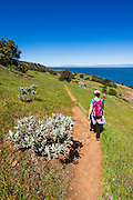 Hiker on the Pelican Bay trail, Santa Cruz Island, Channel Islands National Park, California USA